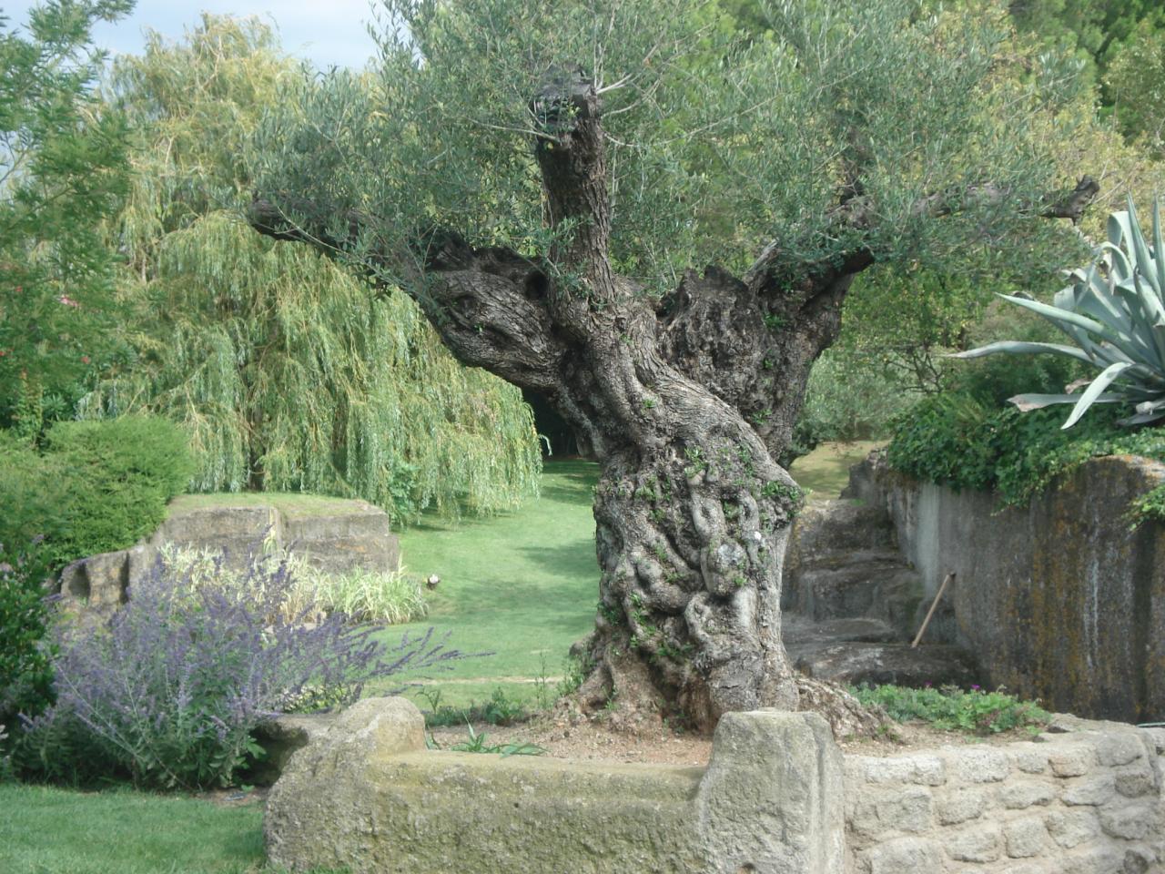 Une visite faire le jardin de saint adrien servian 34 - Les jardins de saint adrien ...
