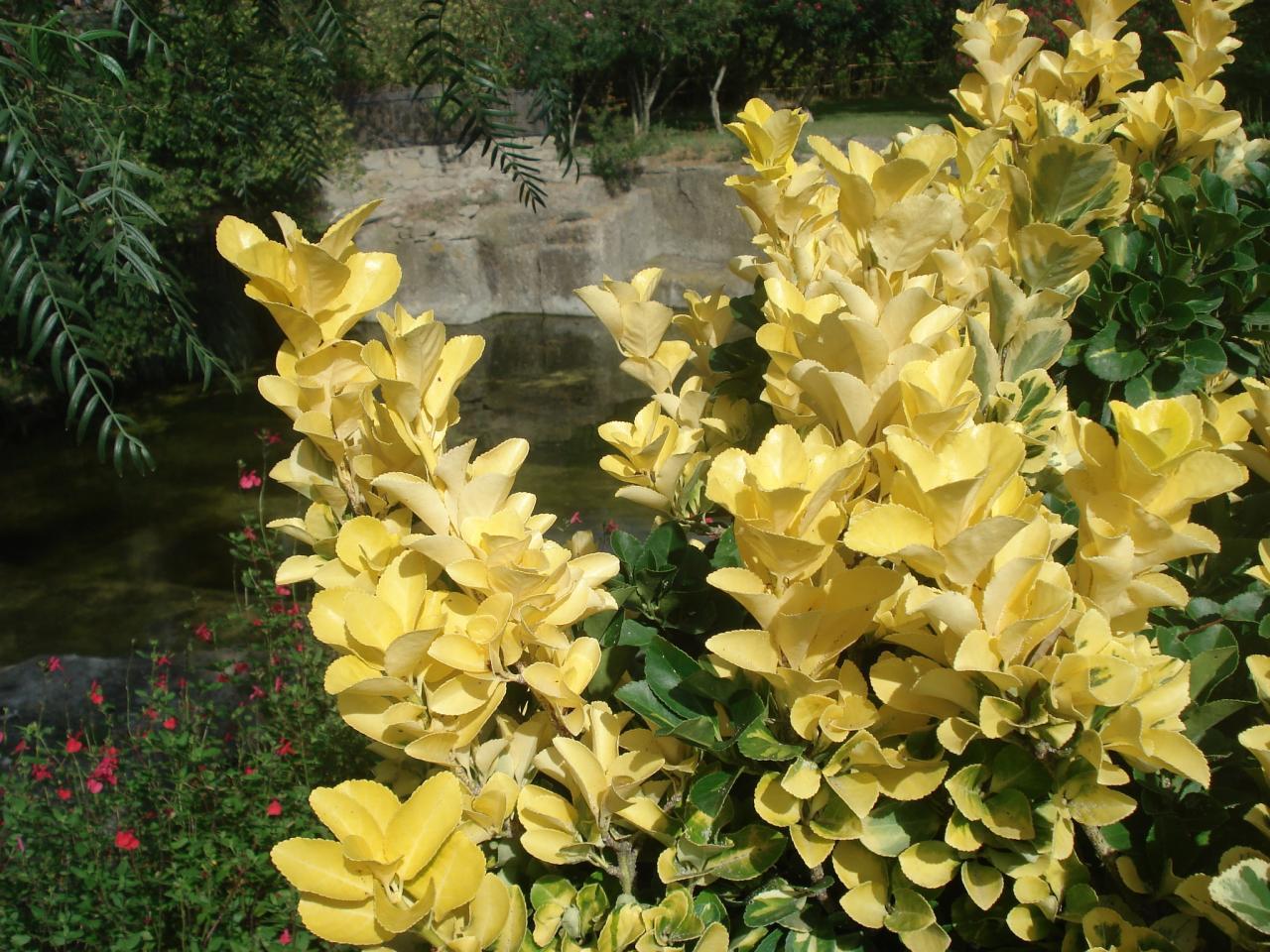 propriétaire jardin saint adrien